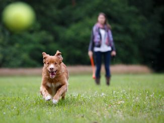 ball-and-pup