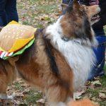Aria as the Hamburger