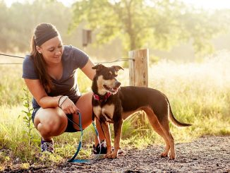 Things To Consider Before Getting a Dog
