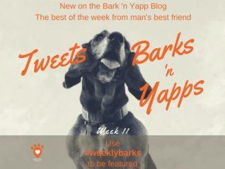 Yapps Week 11