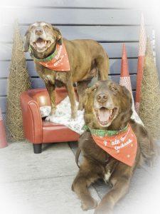 Bark 'n Yapp's 12 Dogs of Christmas - Cali & Trooper