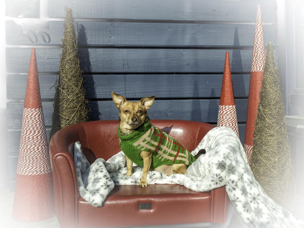 Bark 'n Yapp's 12 Dogs of Christmas - Ceci