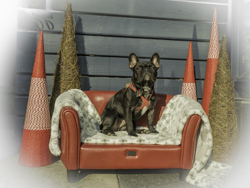 Bark 'n Yapp's 12 Dogs of Christmas - Jaxx