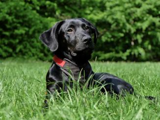 Dog Behaviour