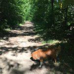 Eldred King Woodlands - 9