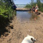 A little flood won't stop pups or hoomans